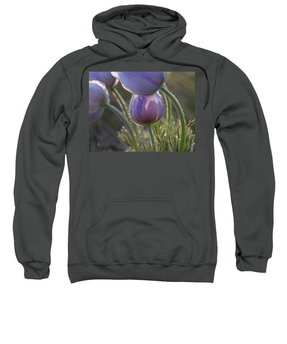 Pasque Sweatshirt featuring the photograph Pasque Shadows by Heather Coen