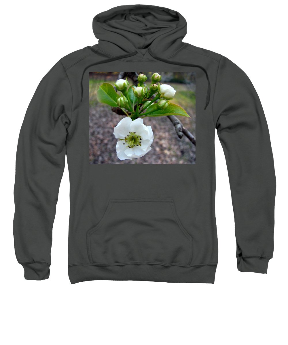 Pear Tree Blossum Sweatshirt featuring the photograph Pear Tree Blossom 3 by J M Farris Photography
