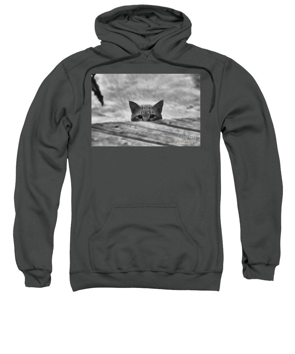 Cat Sweatshirt featuring the photograph Peek A Boo by Carole Martinez