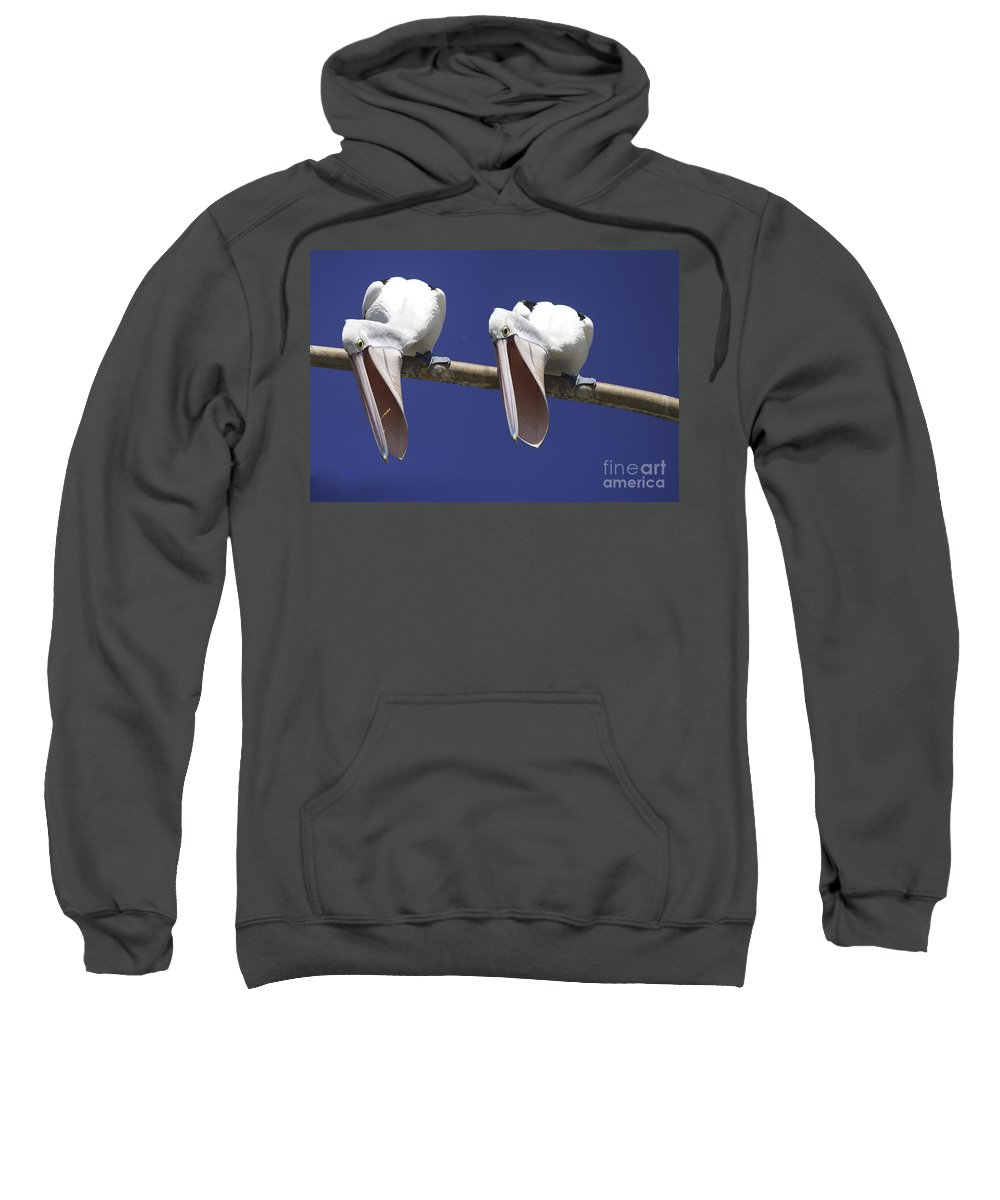 Pelican Sweatshirt featuring the photograph Pelican Burp by Sheila Smart Fine Art Photography