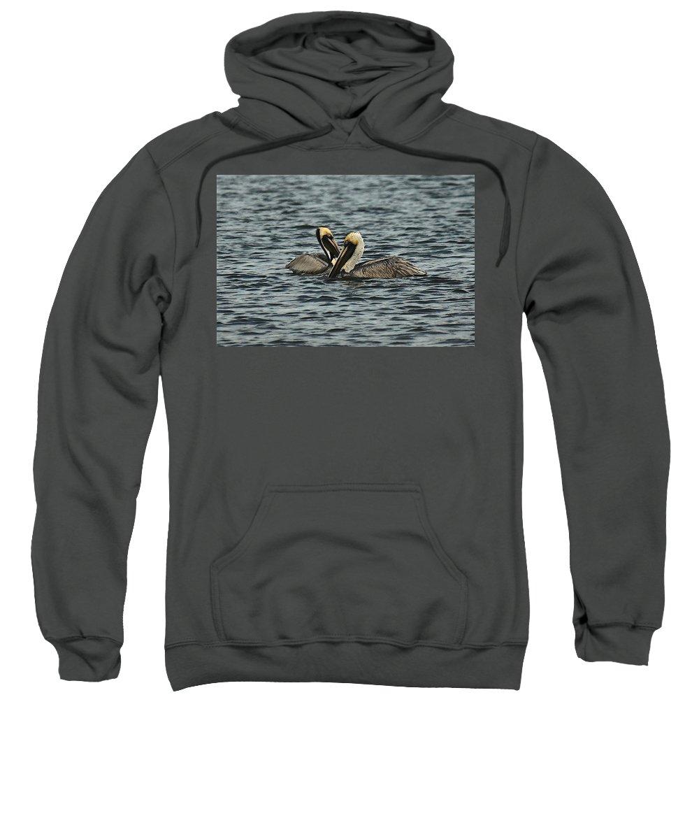 Bird Sweatshirt featuring the photograph Pelican Couple by Colleen Fox
