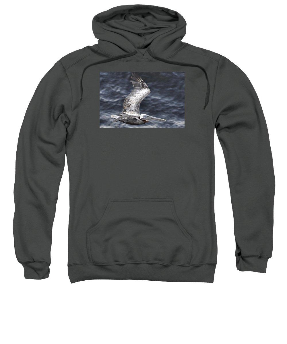 Pelican Sweatshirt featuring the photograph Pelican Flight by Glenn Gordon