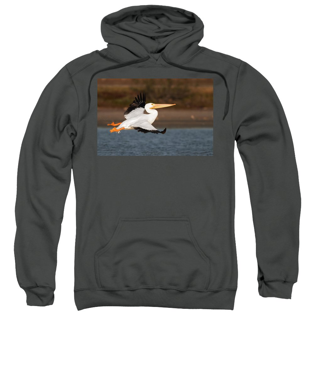 Pelican Sweatshirt featuring the photograph Pelican Lift Off by Gary Langley
