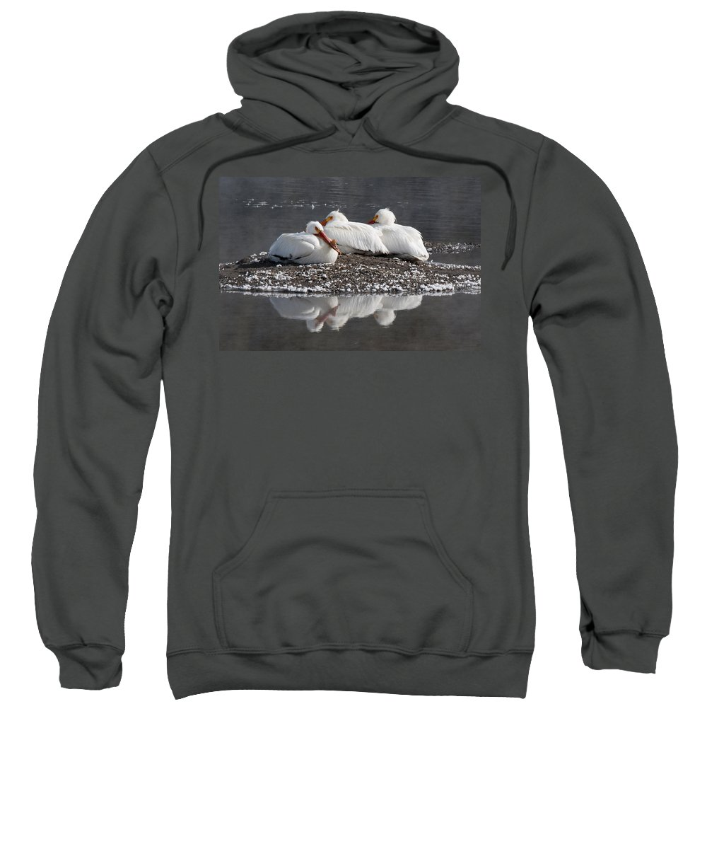 Pelicans Sweatshirt featuring the photograph Pelicans by Gary Beeler