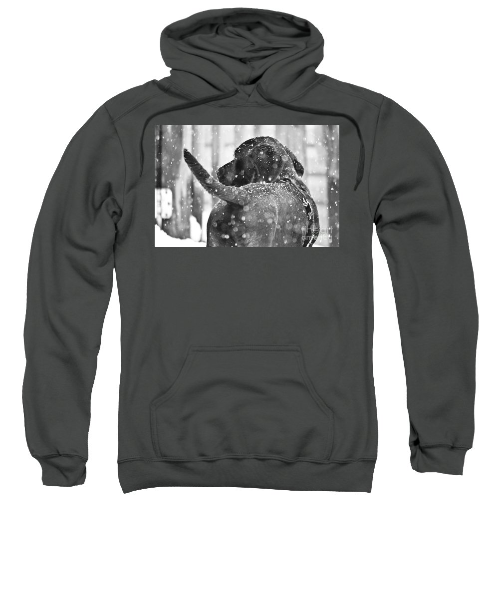 Pepper Sweatshirt featuring the photograph Pepper At Snow by PatriZio M Busnel