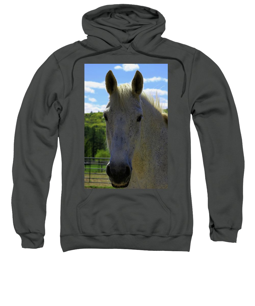 Retired Sweatshirt featuring the photograph Pepper by Kelly Gray