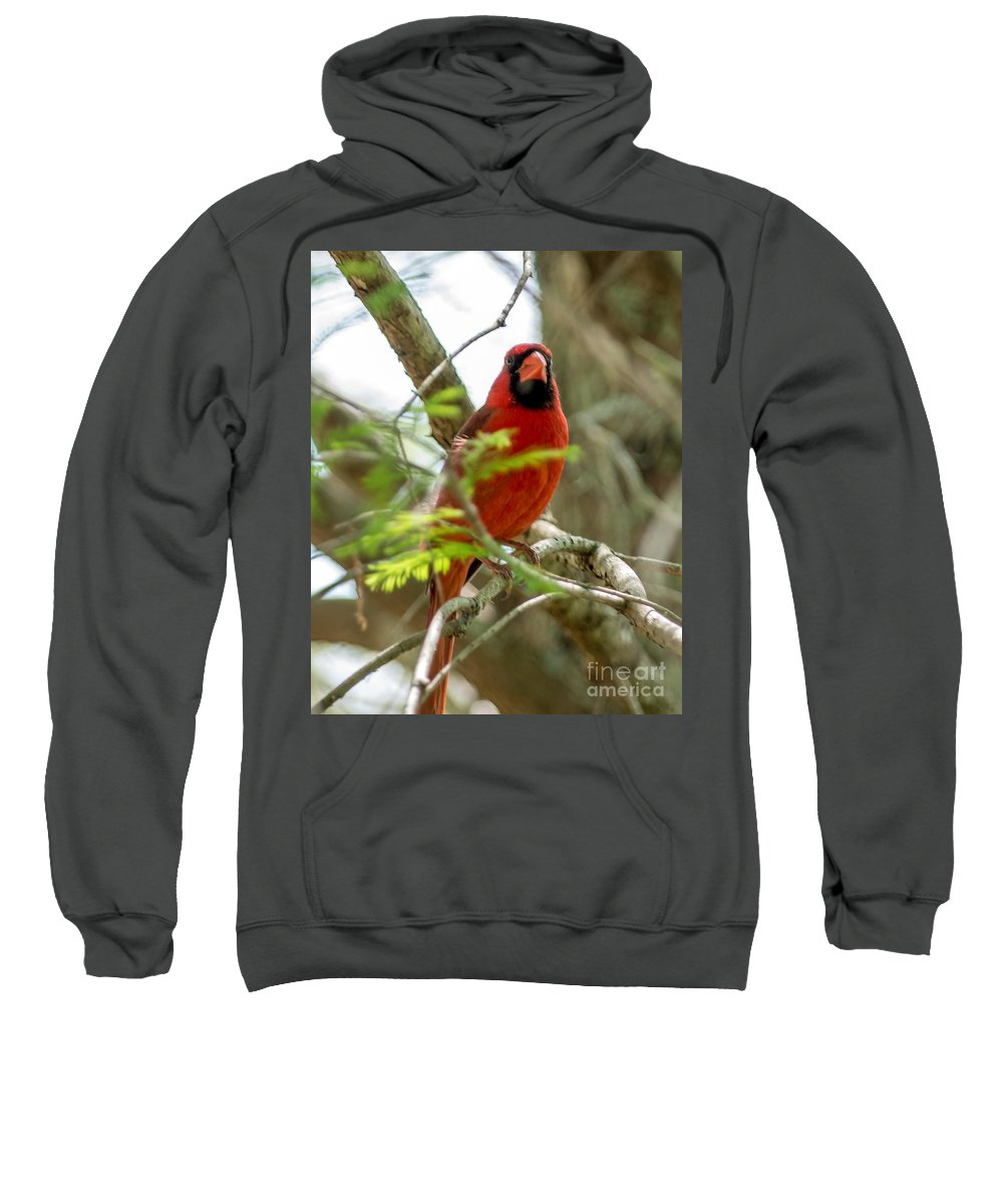 Cardinal Sweatshirt featuring the photograph Perched Cardinal by Stephen Whalen