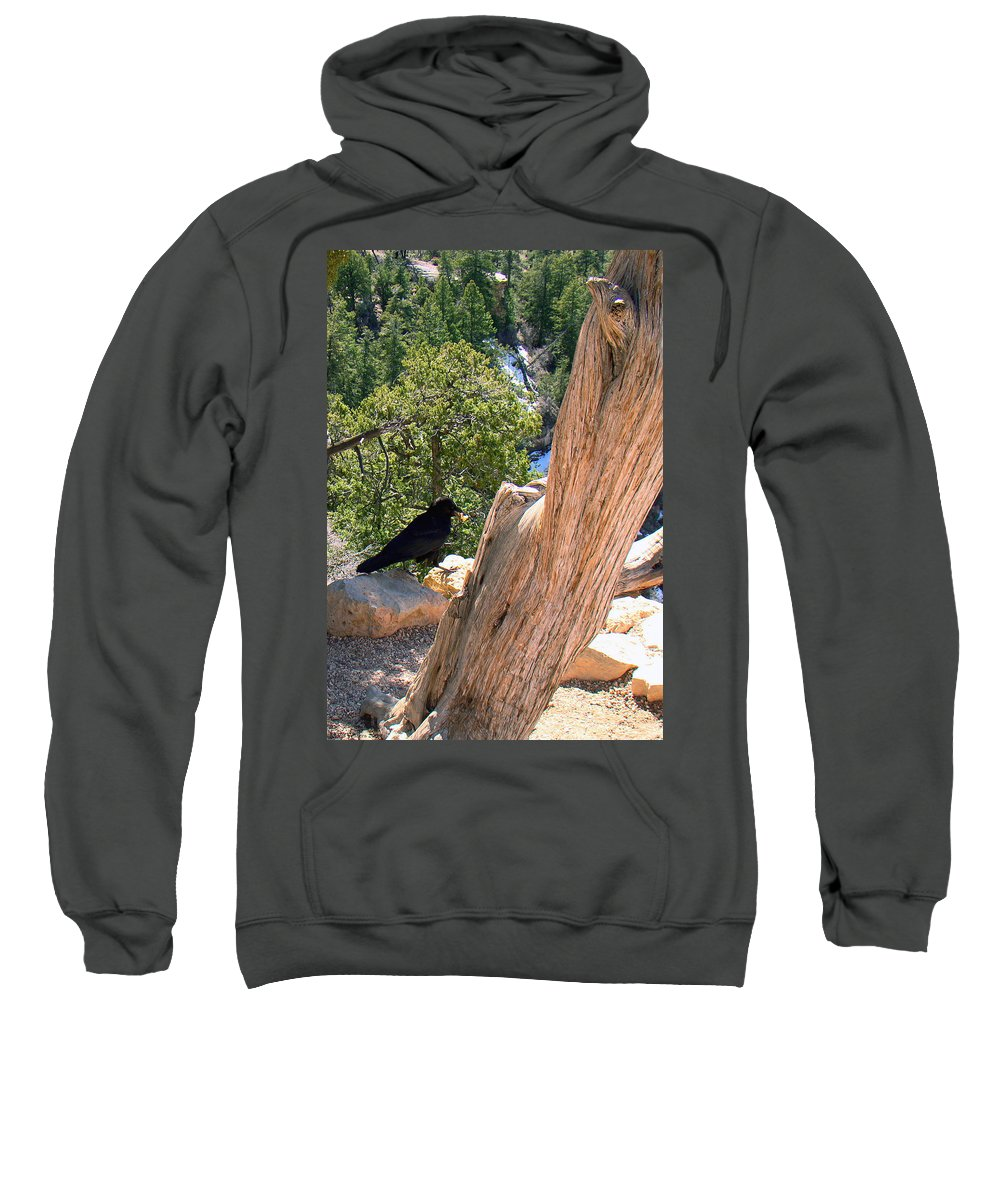 Grand Canyon Sweatshirt featuring the photograph Petrified Raven At Grand Canyon by Merja Waters
