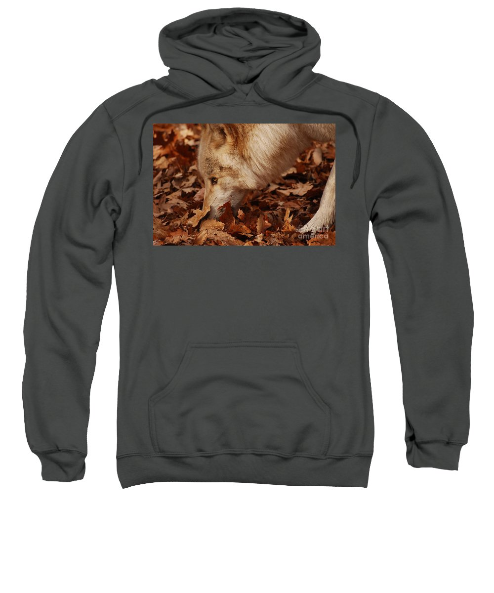 Wolf Sweatshirt featuring the photograph Picking Up The Scent by Lori Tambakis