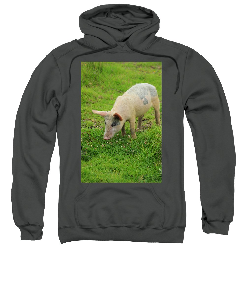 Pig Sweatshirt featuring the photograph Pig In Wildflowers by Robert Hamm