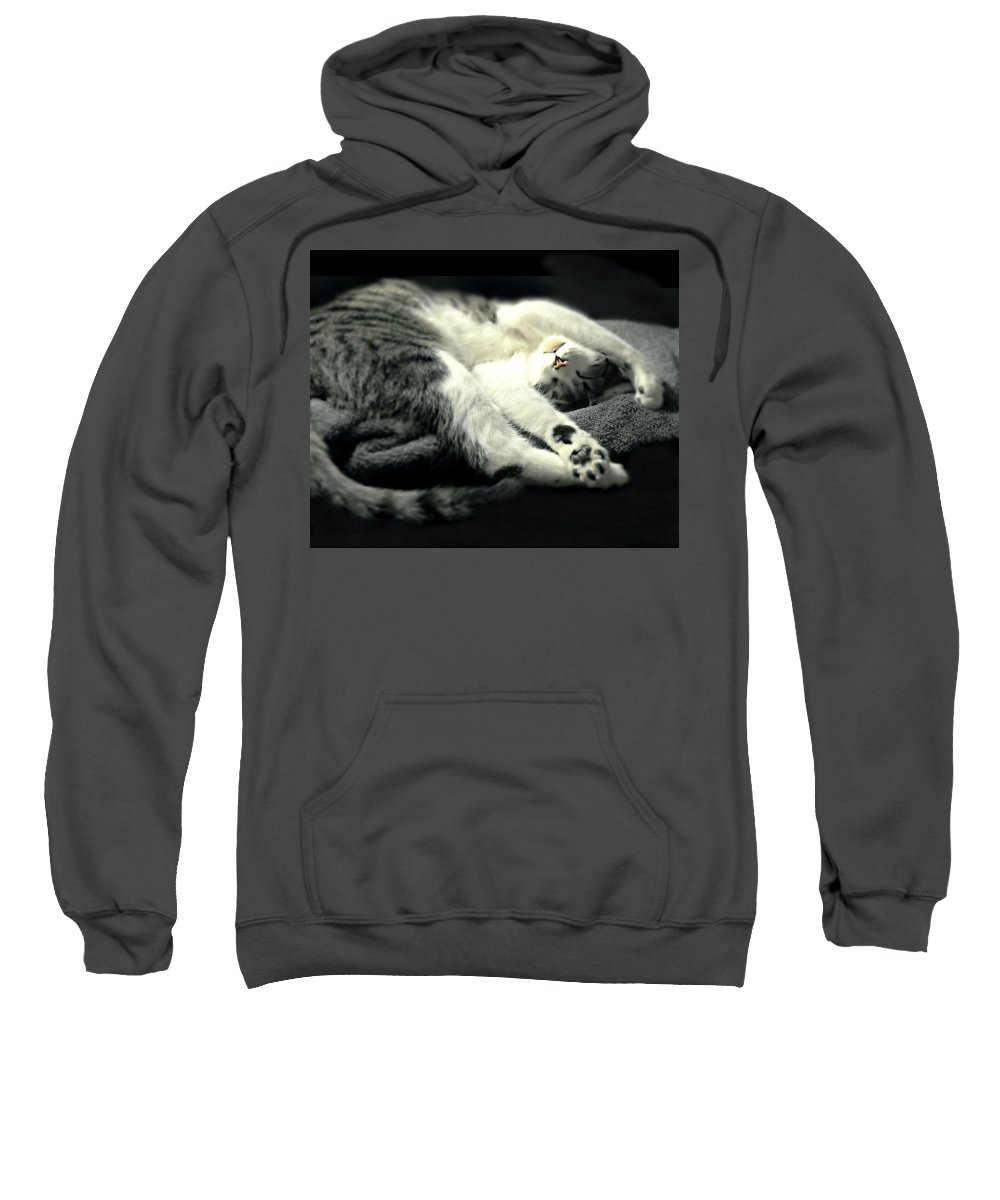 Cat Sweatshirt featuring the photograph Pilates Cat by Diana Angstadt