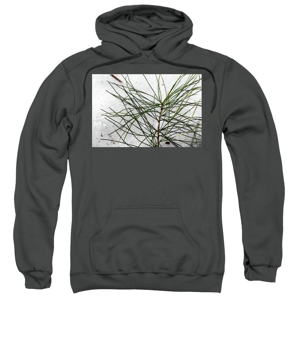 50 Sweatshirt featuring the photograph Pine by Marissa Mancini