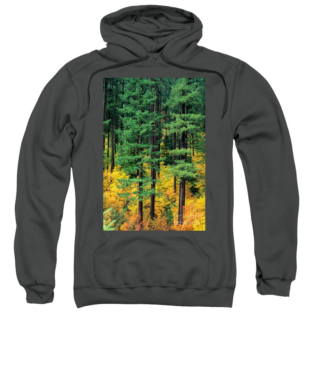 Afternoon Sweatshirt featuring the photograph Pine Trees In Autumn by Carl Shaneff - Printscapes
