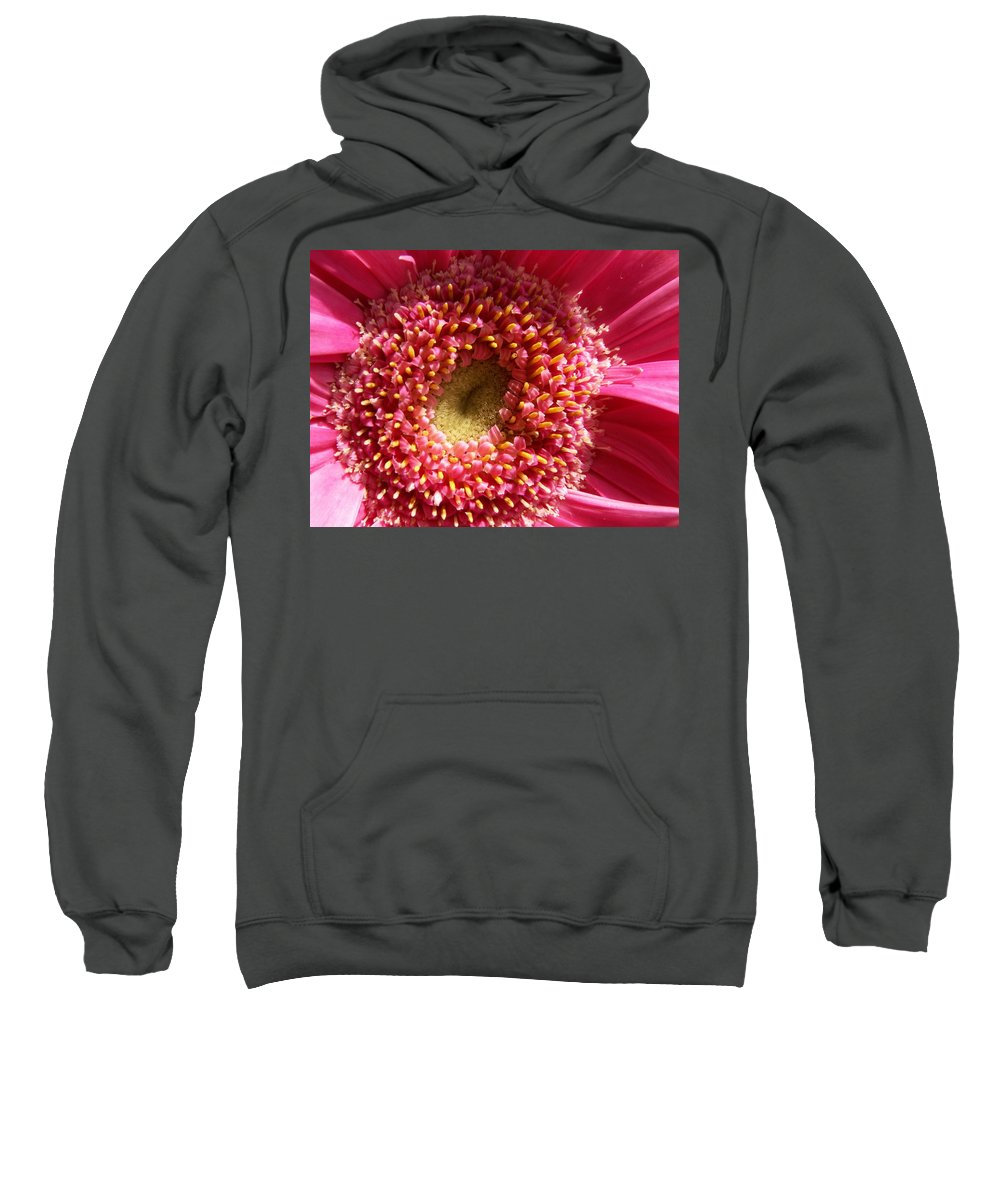Pink Sweatshirt featuring the photograph Pink Gerbera Daisy by Amy Fose