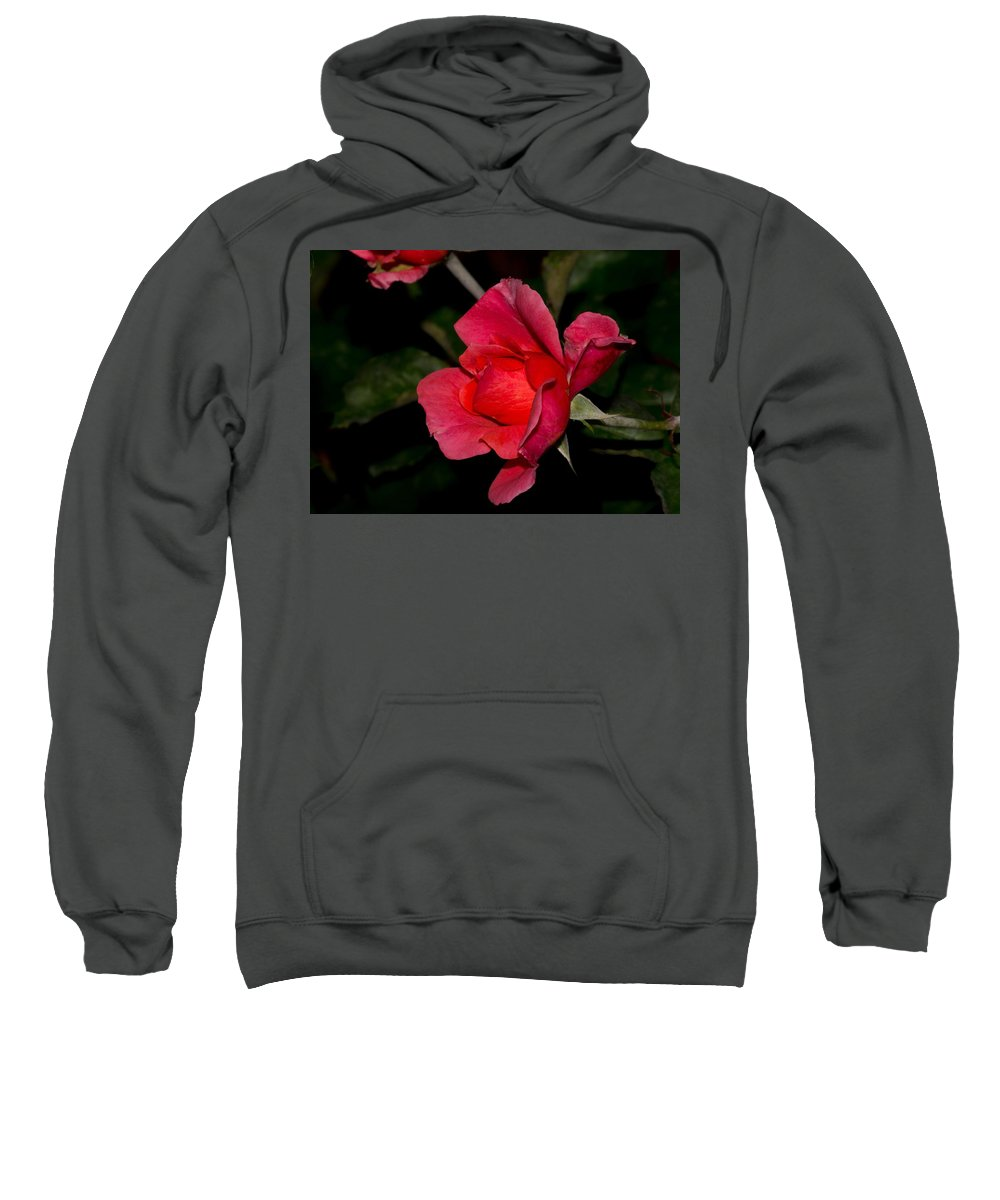 Rose Sweatshirt featuring the photograph Pink Rose 2 by Royal Tyler