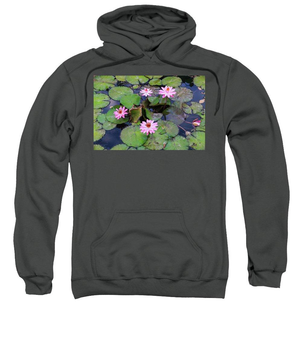 Flowers Sweatshirt featuring the photograph Pink Water Lilies by Carol VanDyke