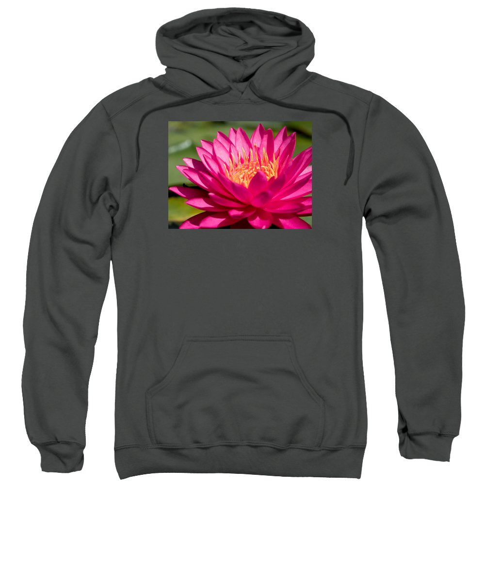 Waterlily Sweatshirt featuring the photograph Pink Waterlily by Paula Ponath
