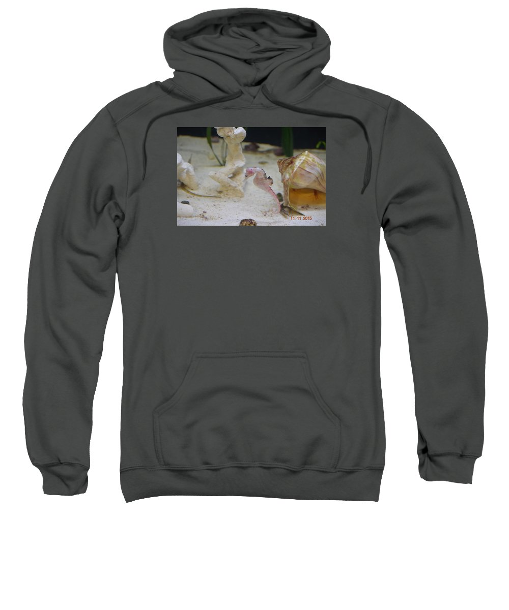 Pink Seahorse And Shells Sweatshirt featuring the photograph Pinky by Shellda Patino