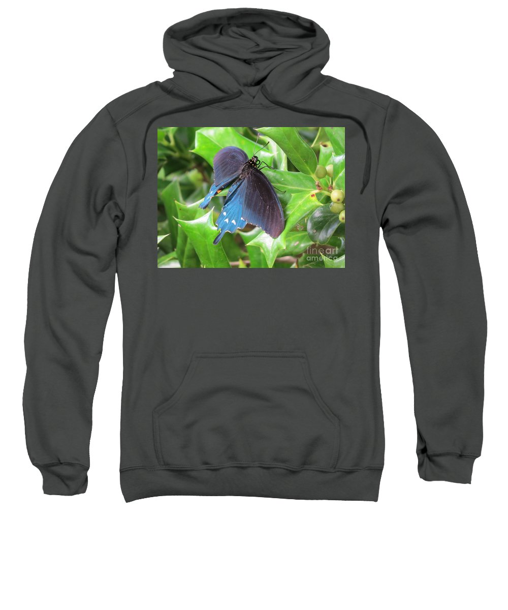 Swallowtail Butterfly Sweatshirt featuring the photograph Pipevine Swallowtail by Charles Green