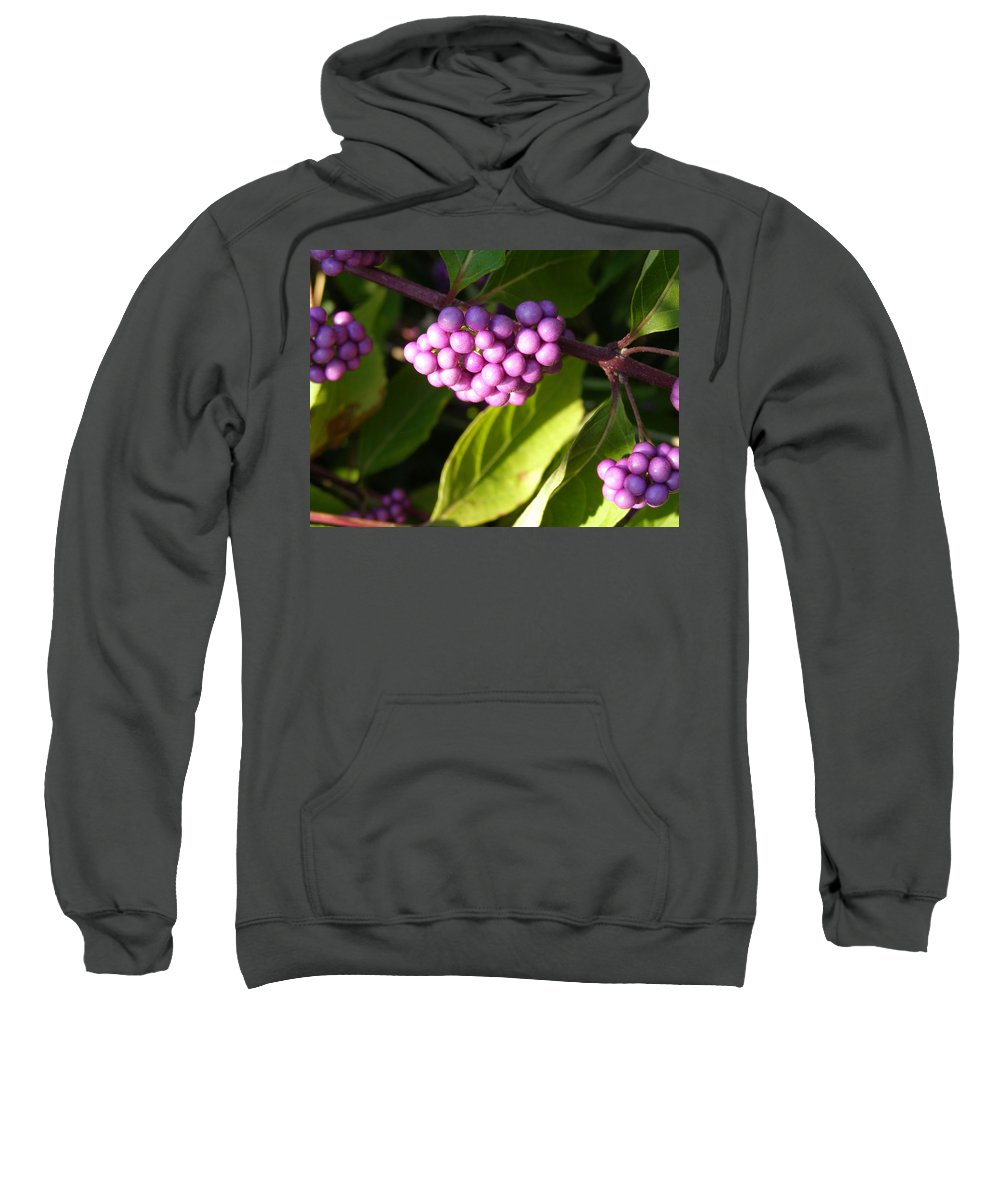 Planting Fields Sweatshirt featuring the photograph Planting Fields Purple by Howard Rose