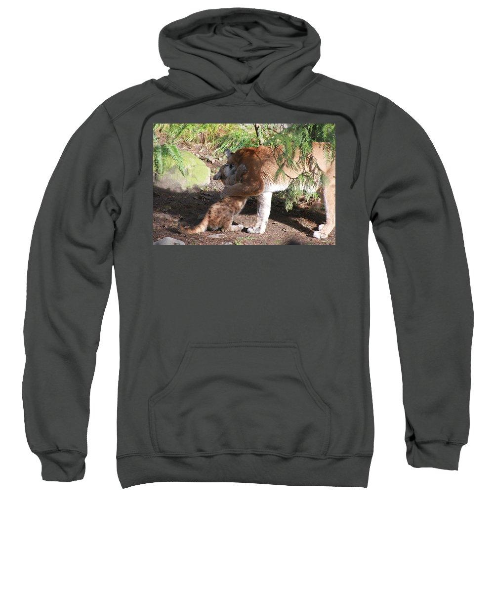 Palus Sweatshirt featuring the photograph Playful Hugs by Laddie Halupa