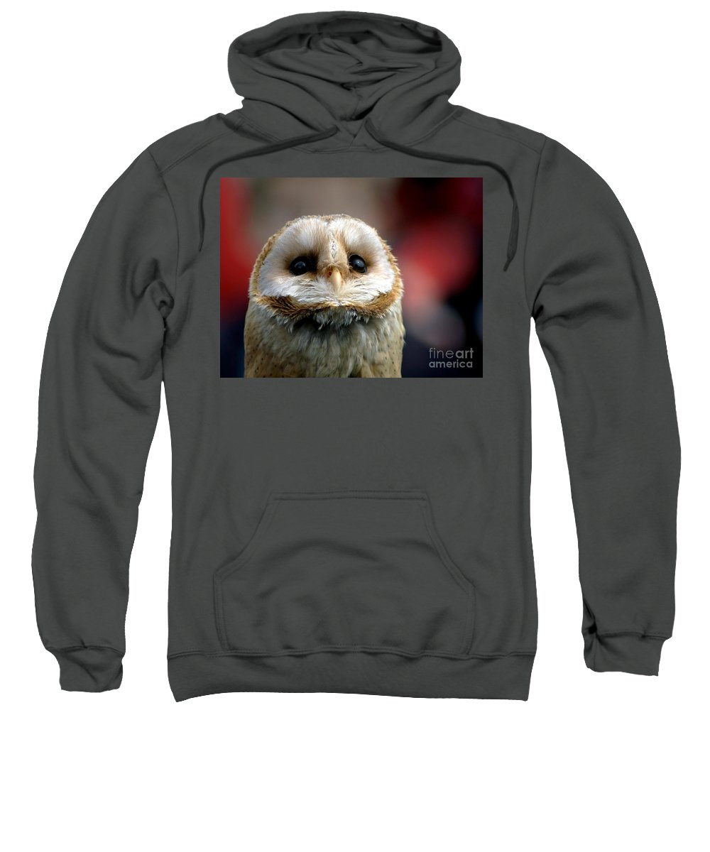 Wildlife Sweatshirt featuring the photograph Please by Jacky Gerritsen