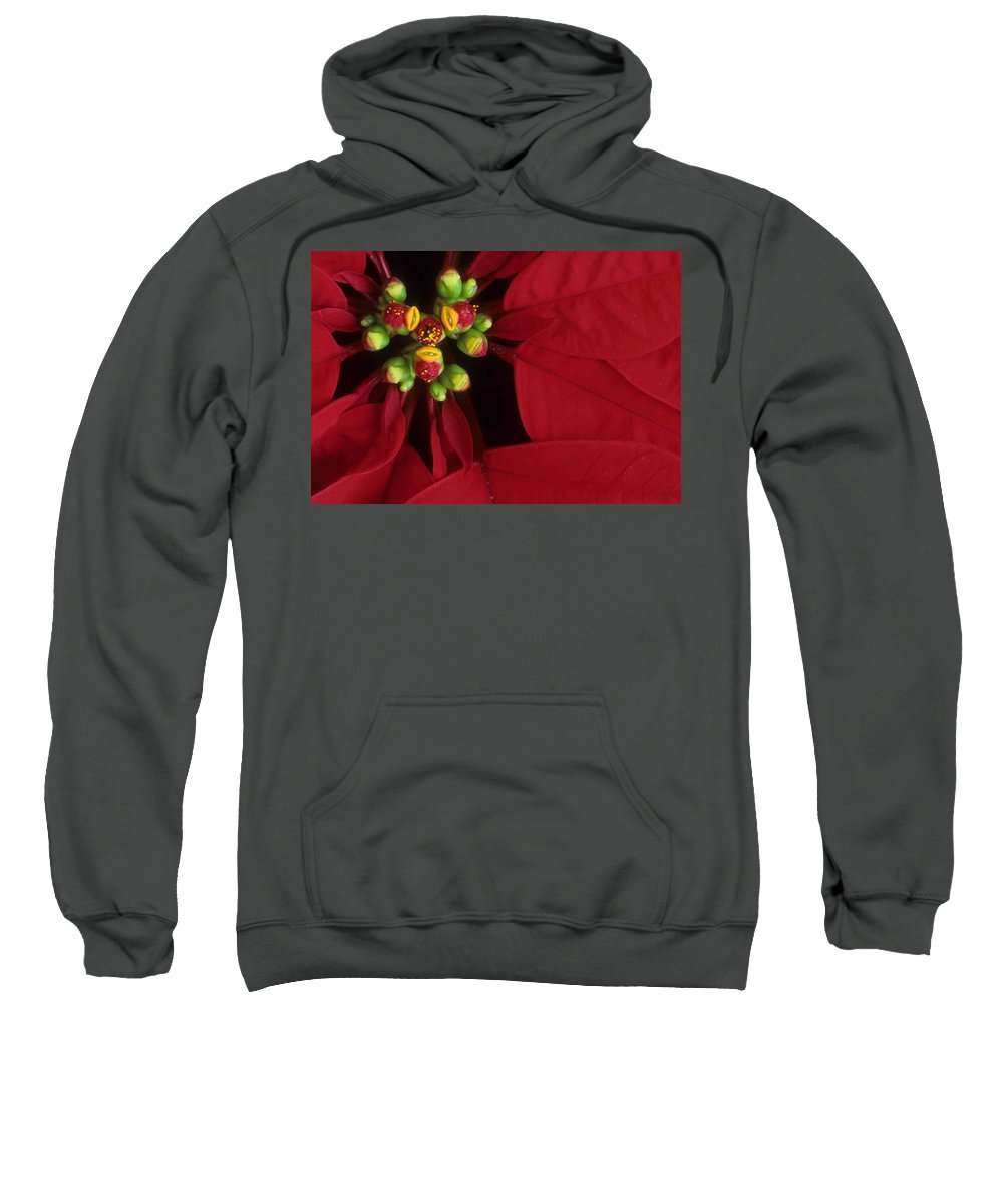 Poinsettia Sweatshirt featuring the photograph Poinsettia by Laurie Paci