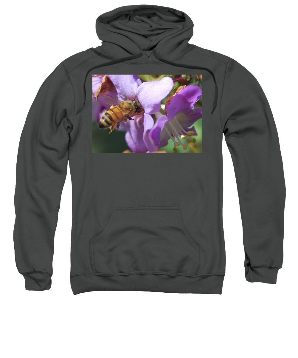 Bee Sweatshirt featuring the photograph Pollinating 5 by Amy Fose
