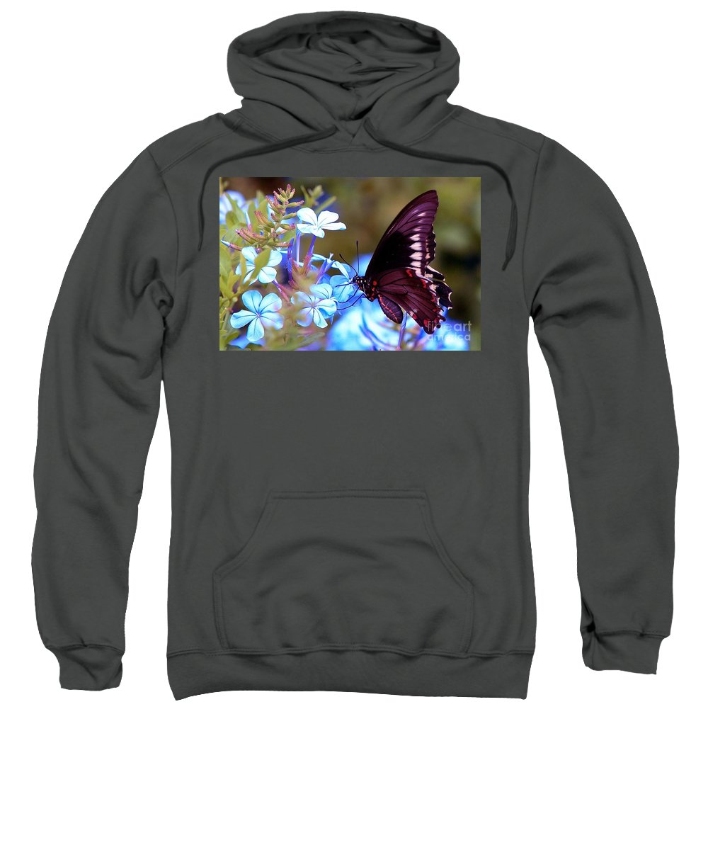 Butterfly Sweatshirt featuring the photograph Polydamas Swallowtail Butterfly by Randy Matthews