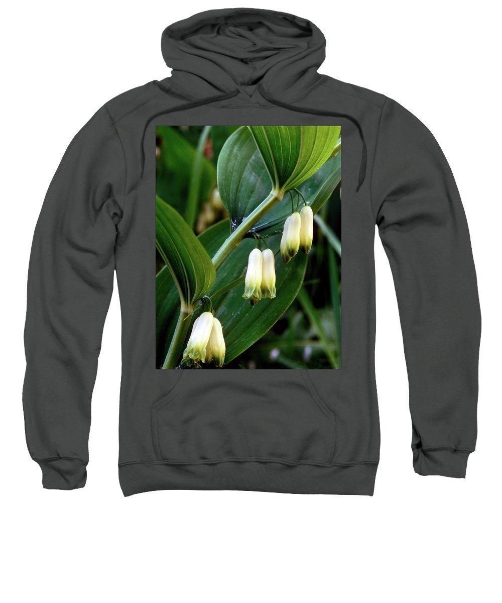 Angular Solomon's Seal Sweatshirt featuring the photograph Polygonatum Odoratum by Jarmo Honkanen