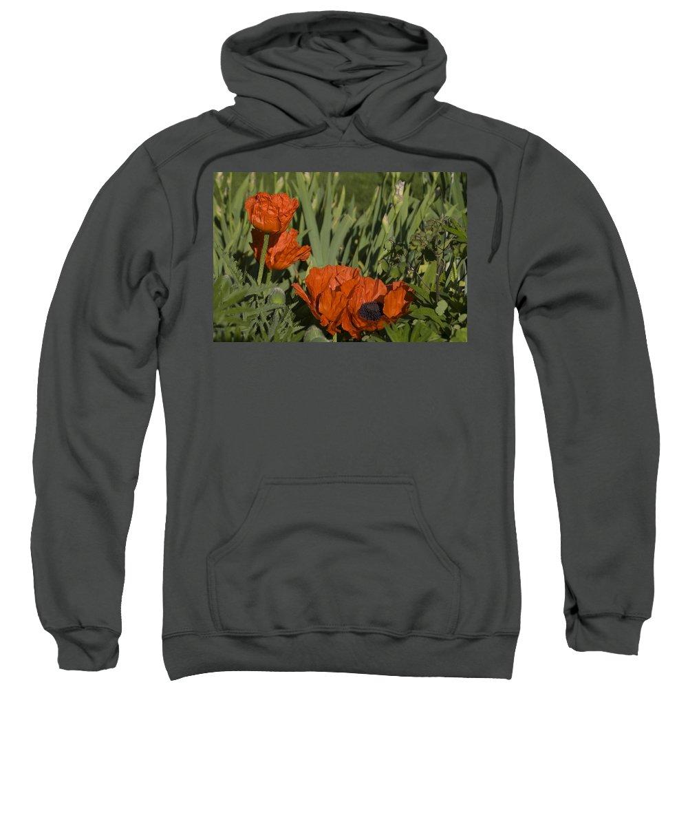 Poppy Sweatshirt featuring the photograph Poppies 1 by Sara Stevenson