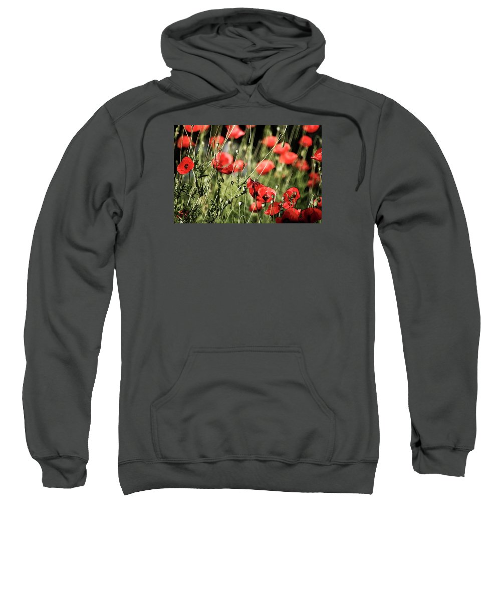Wind Sweatshirt featuring the photograph Poppies In The Wind by Cliff Norton