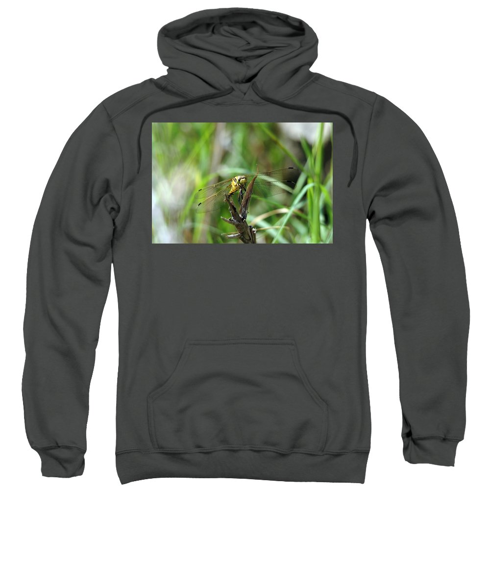 Dragonfly Sweatshirt featuring the photograph Portrait Of A Dragonfly by Cliff Norton