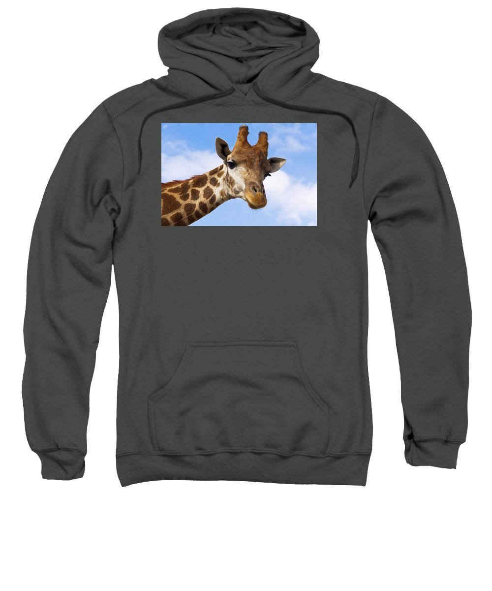 Outdoor Sweatshirt featuring the photograph Portrait Of A Giraffe On The Background Of Blue Sky. by Olga Goncharenko