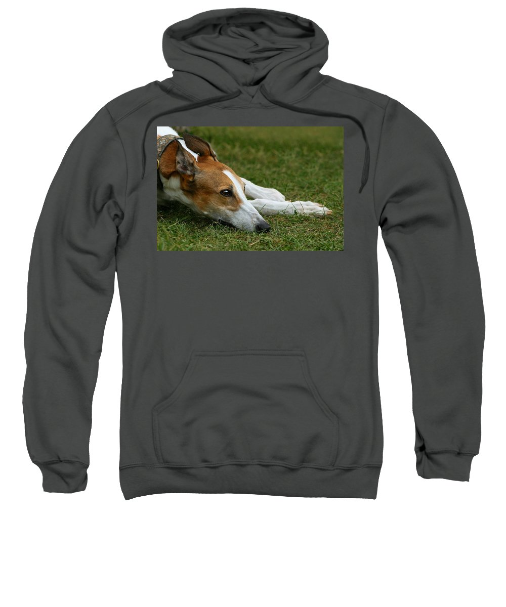 Editorial Sweatshirt featuring the photograph Portrait Of A Greyhound - Soulful by Angela Rath