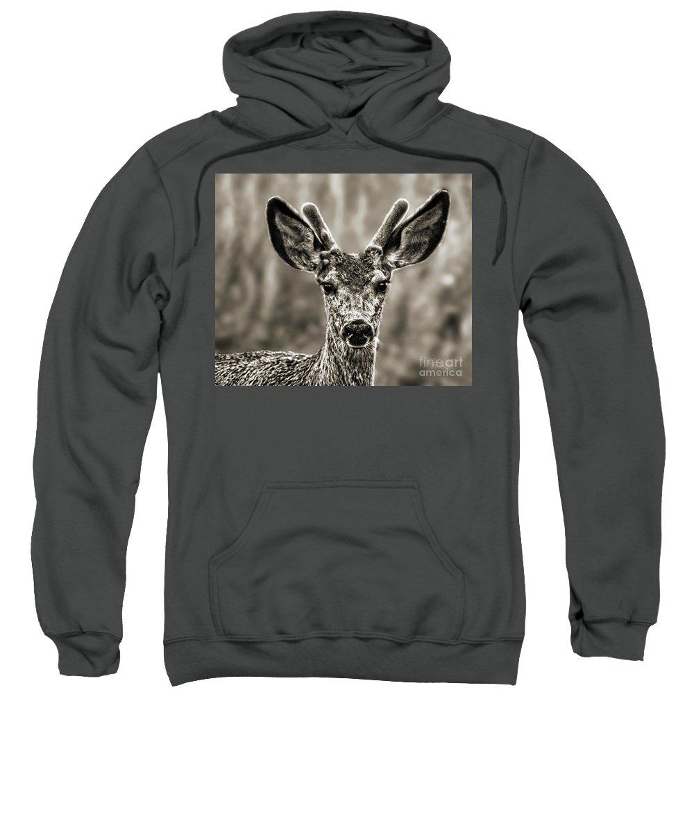 Antlers Sweatshirt featuring the digital art Portrait Of A Male Deer II by Jim Fitzpatrick