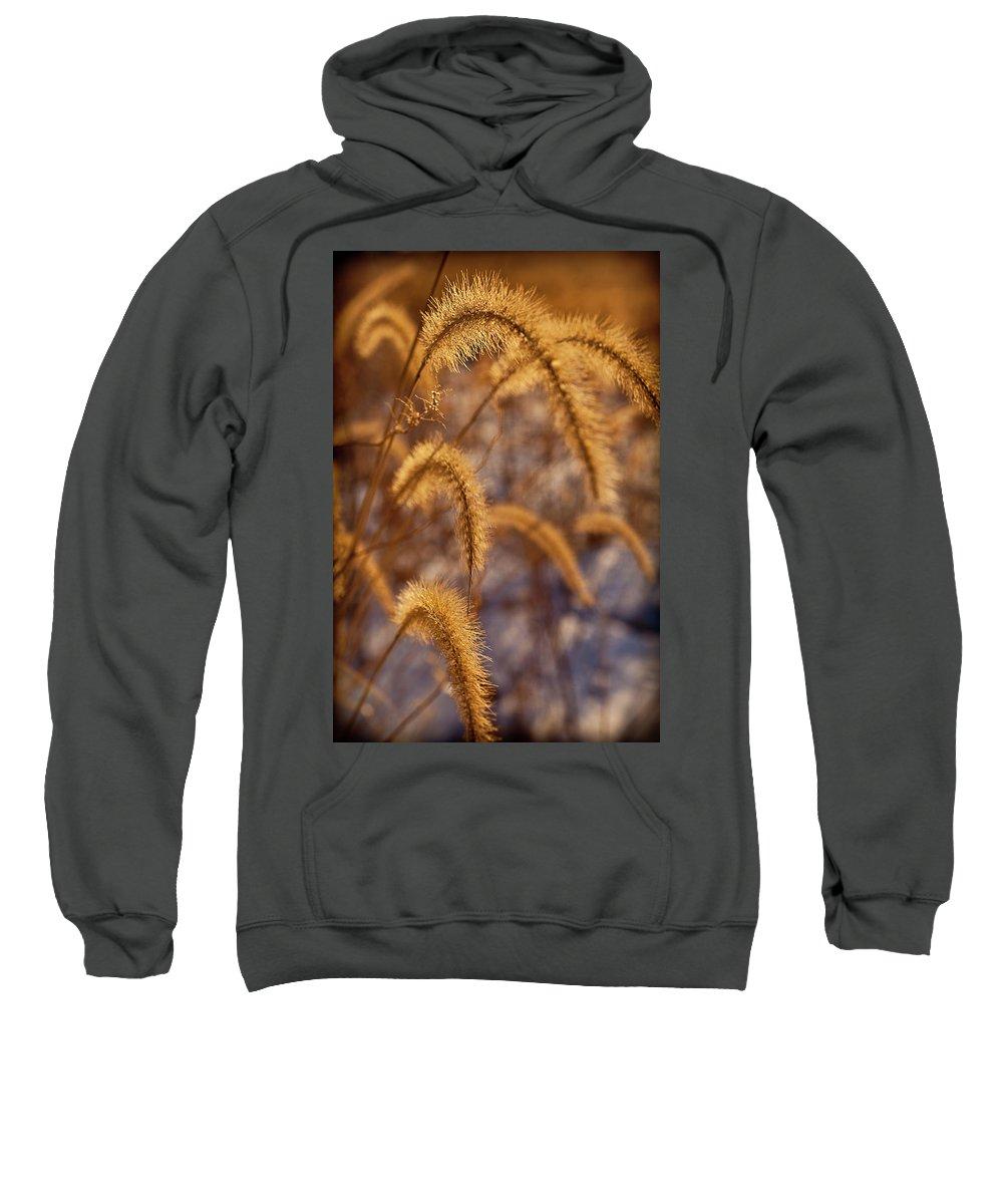 Midewin Sweatshirt featuring the photograph Prairie Grass Detail by Steve Gadomski
