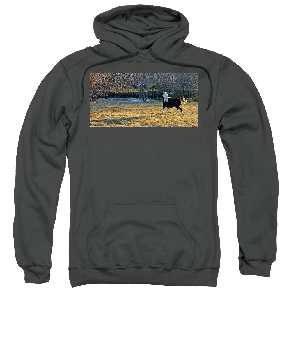 Horse Sweatshirt featuring the photograph Prance by Steve Karol
