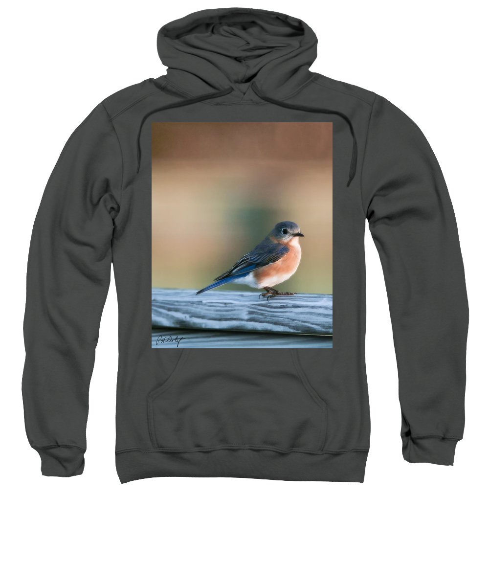 Bird Sweatshirt featuring the photograph Pretty In Blue by Phill Doherty