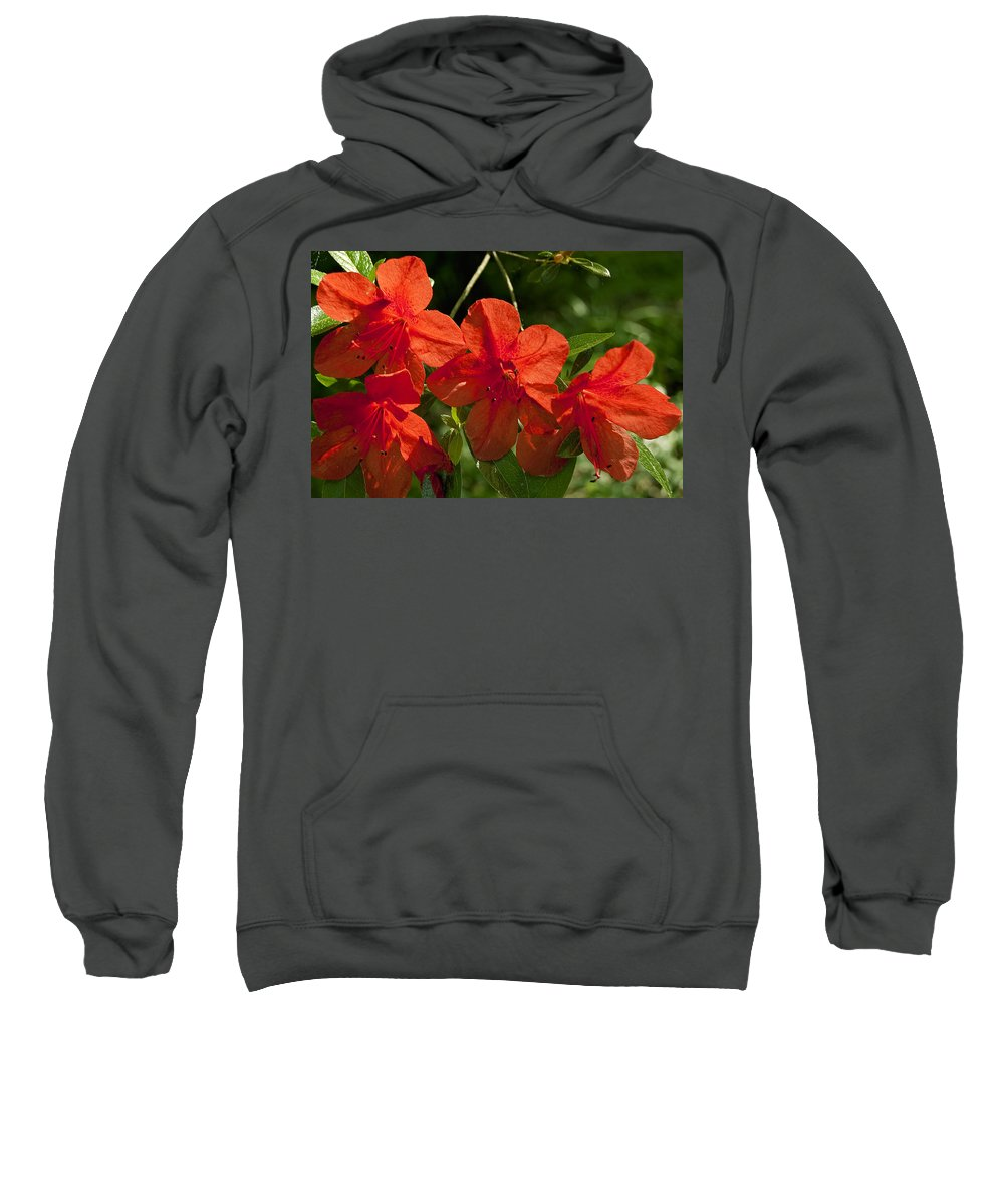 Flowers Sweatshirt featuring the photograph Pretty In Red by Gary Adkins