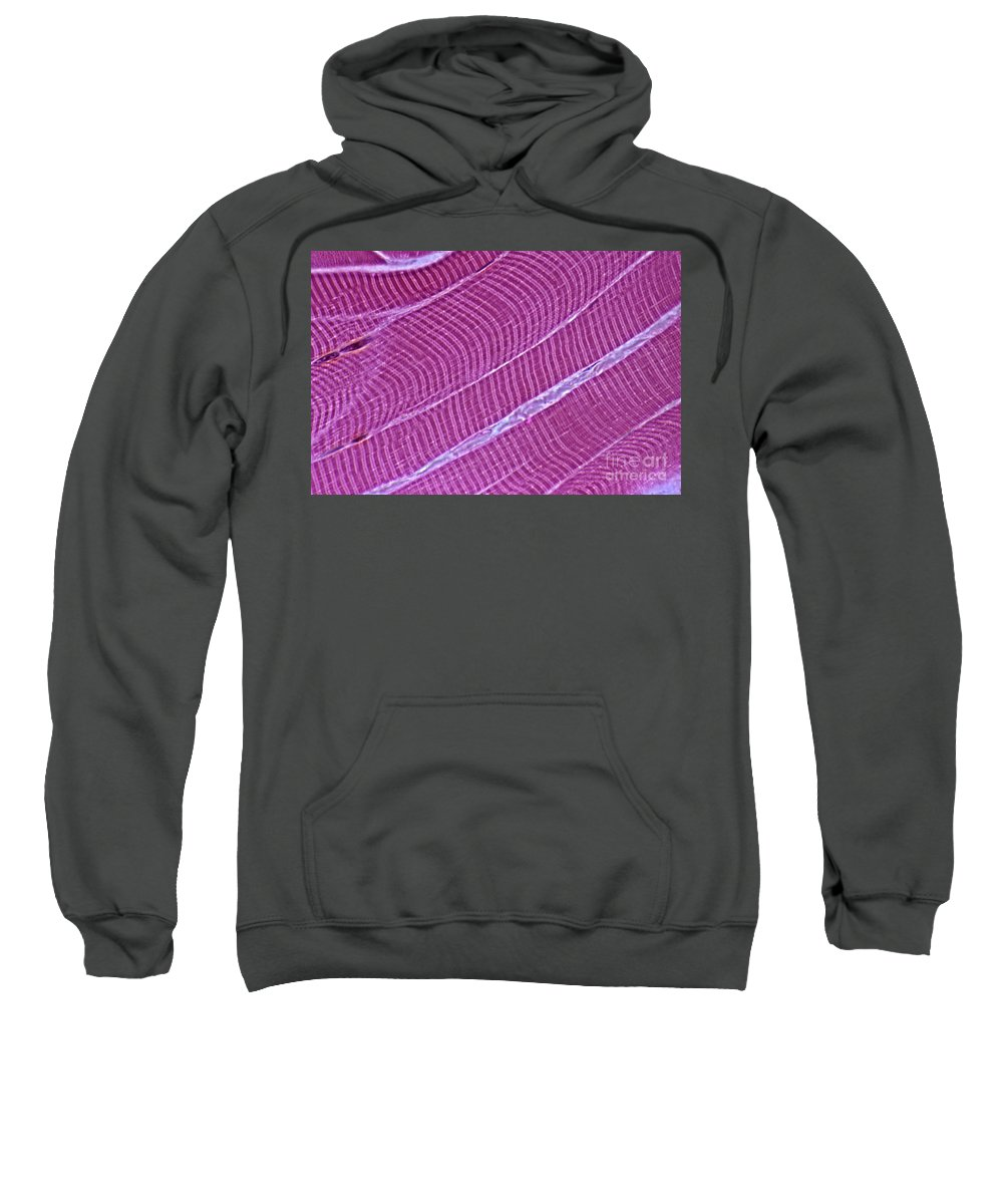 Light Microscopy Sweatshirt featuring the photograph Primate Skeletal Muscle by M. I. Walker