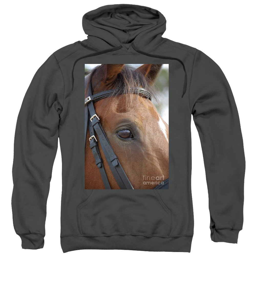 Horse Sweatshirt featuring the photograph Prinz by Jim And Emily Bush