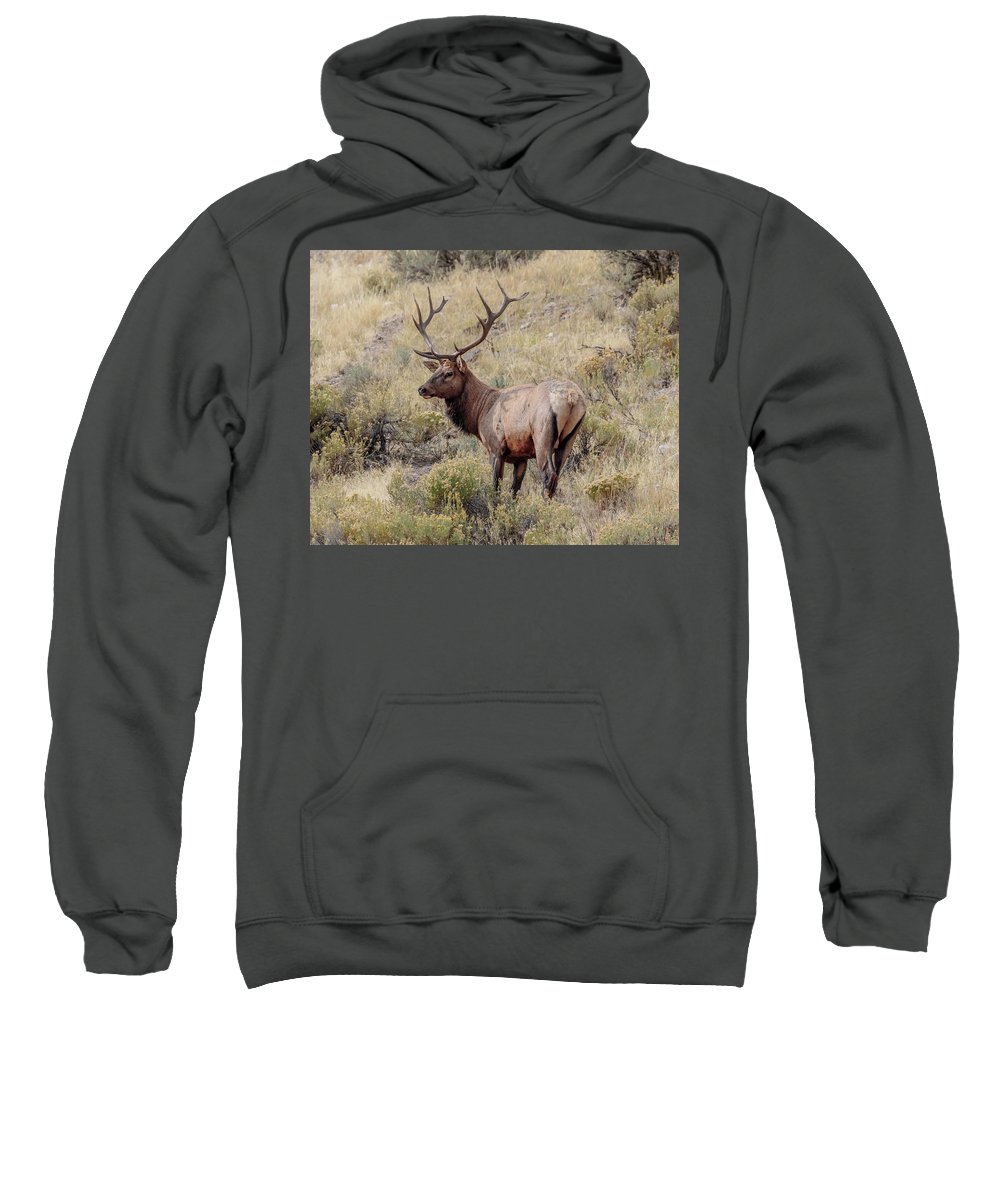 Prize Bull Elk Sweatshirt featuring the photograph Prize Bull Elk by Wes and Dotty Weber