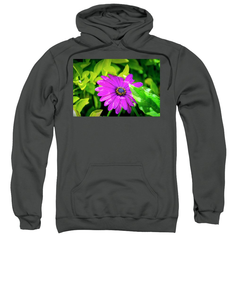 Flower Sweatshirt featuring the photograph Purple Flower by Daniel Murphy