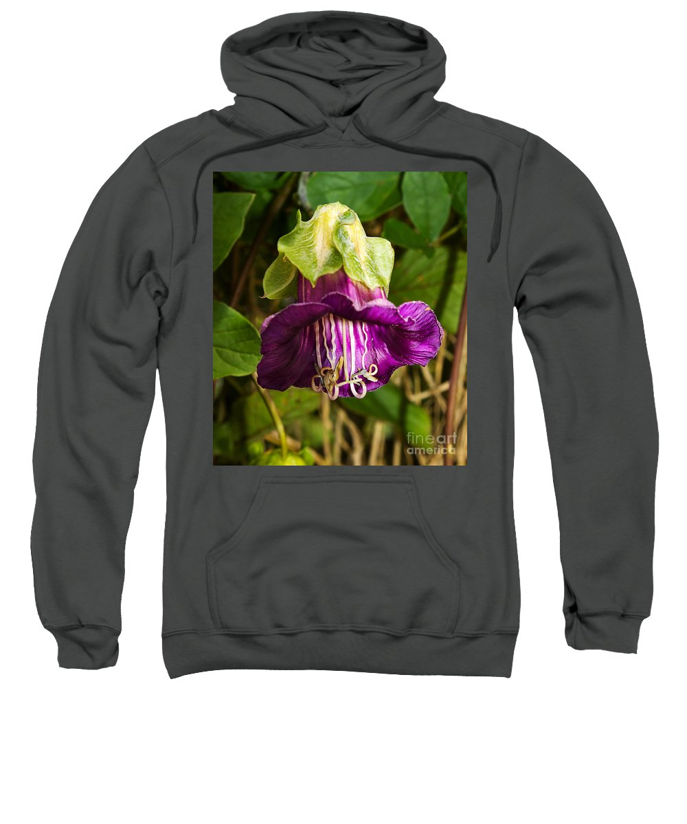 Flower Sweatshirt featuring the photograph Purple Flower Of The Vine Known As Cathedral Bells by Louise Heusinkveld