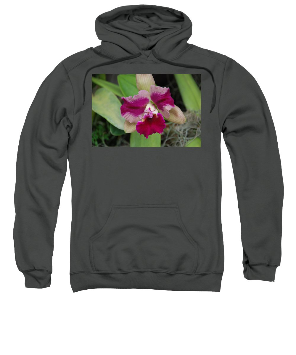 Macro Sweatshirt featuring the photograph Purple Orchid by Rob Hans
