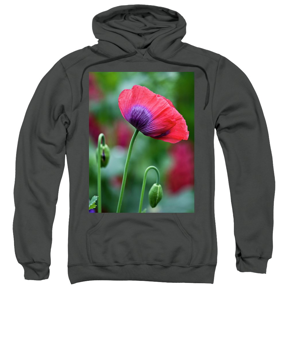Poppy Sweatshirt featuring the photograph Purple Poppy Flower by Heiko Koehrer-Wagner