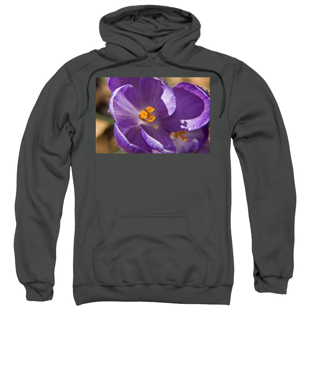 Crocus Sweatshirt featuring the photograph Purple Spring Crocus by Teresa Mucha