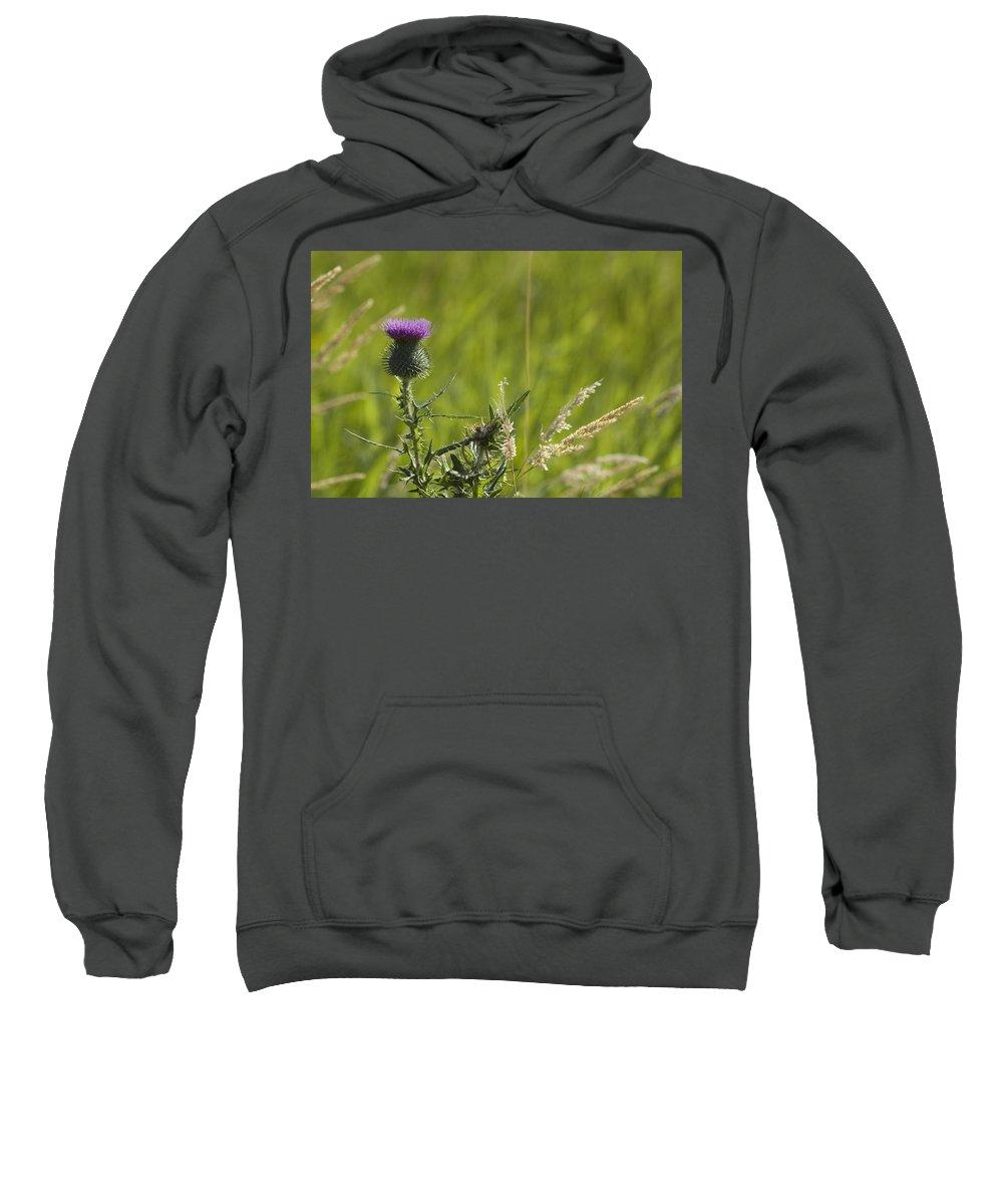Thistle Sweatshirt featuring the photograph Purple Thistle by Sara Stevenson