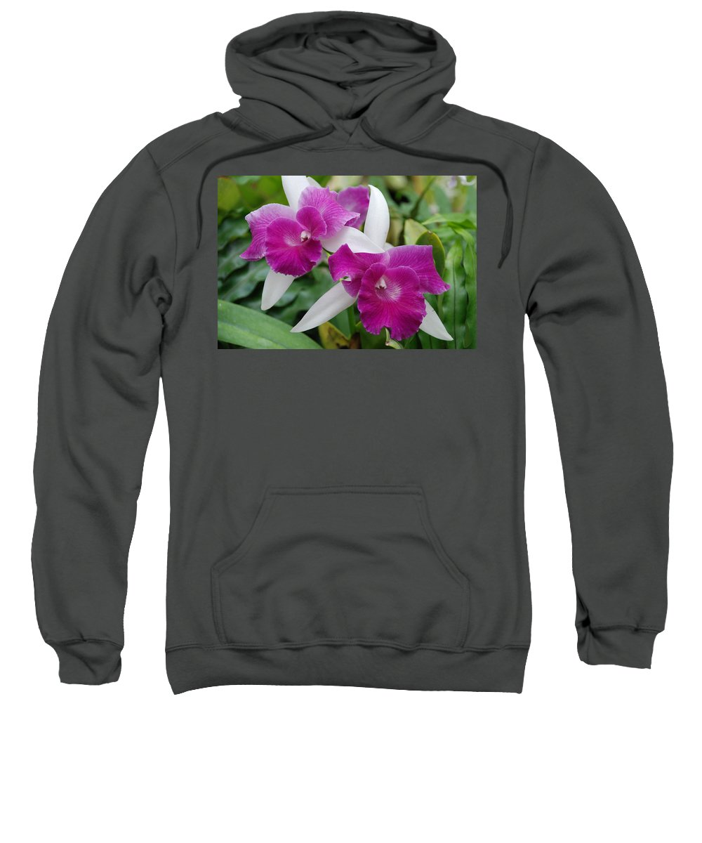 Macro Sweatshirt featuring the photograph Purple White Orchids by Rob Hans